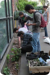 guerilla gardening activsme environnemental